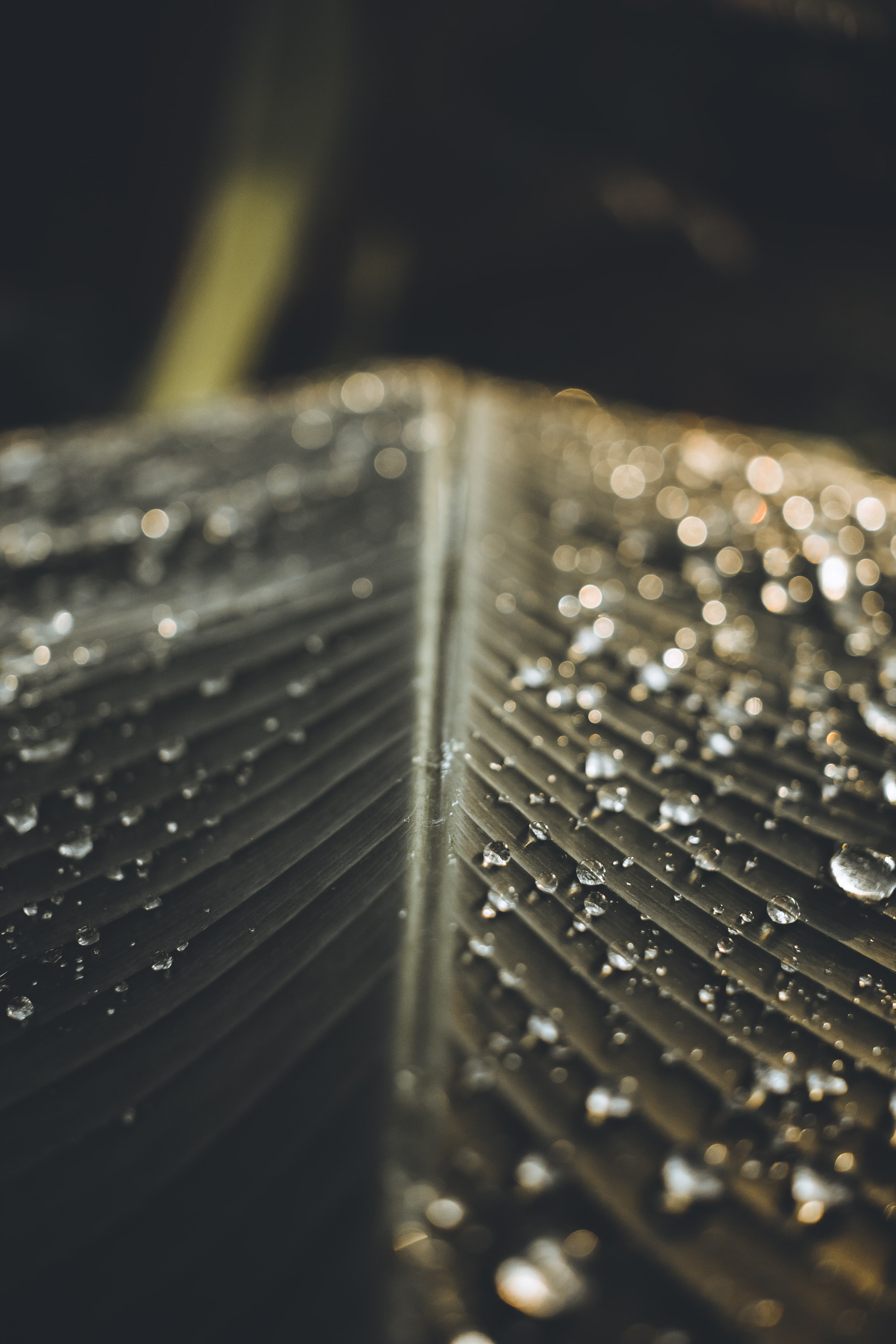 139637 download wallpaper Macro, Sheet, Leaf, Drops, Wet screensavers and pictures for free