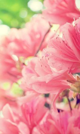 14269 скачать обои Растения, Цветы - заставки и картинки бесплатно