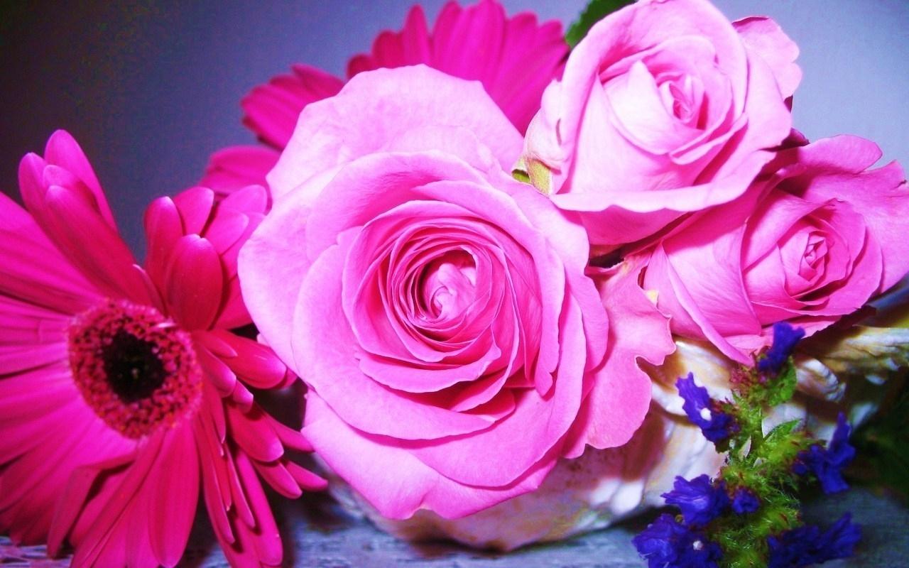 4204 скачать обои Растения, Цветы, Розы - заставки и картинки бесплатно