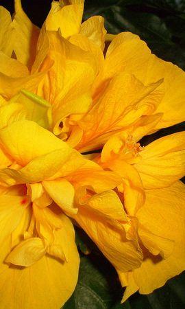 5322 скачать обои Растения, Цветы - заставки и картинки бесплатно