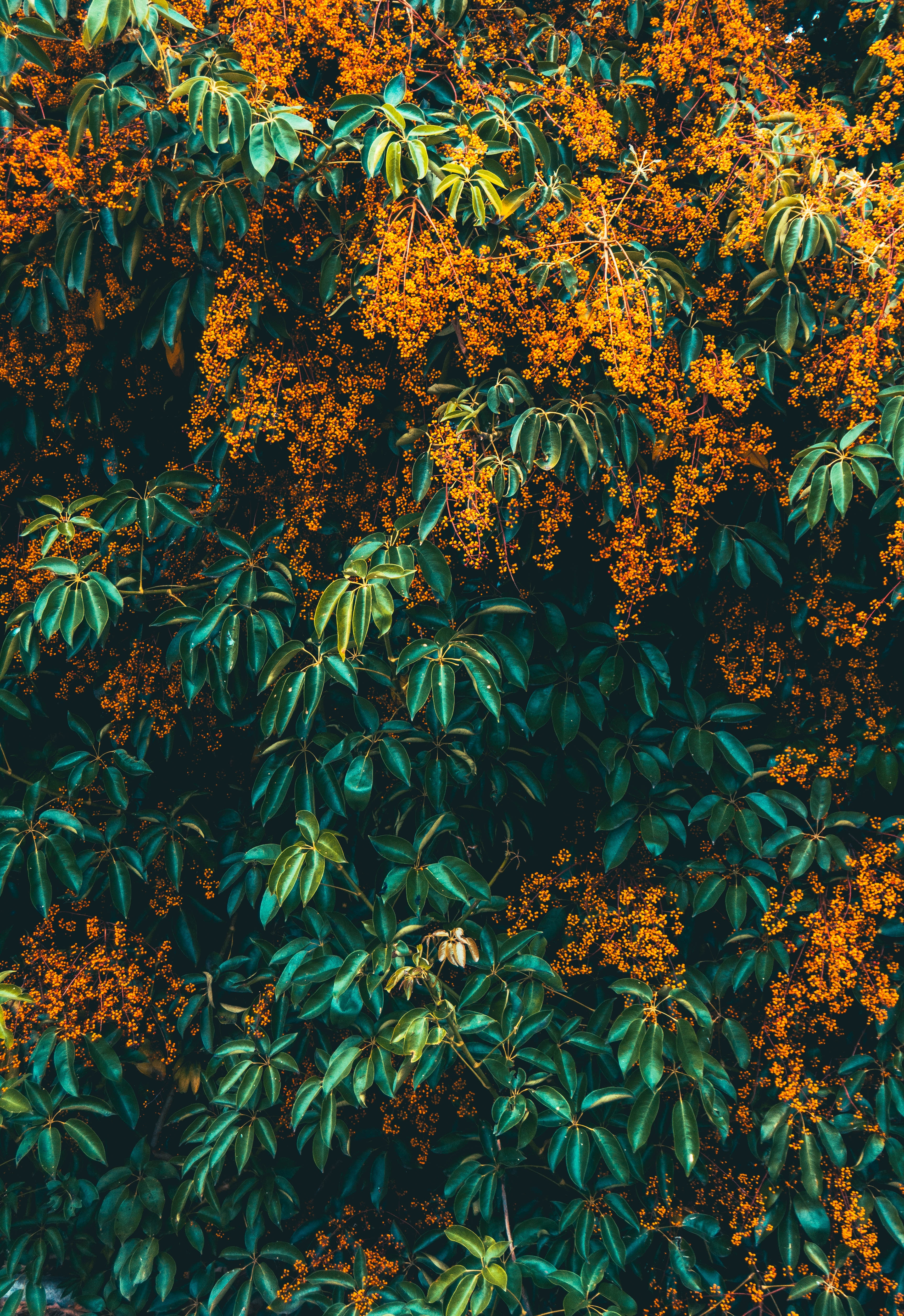 63224 download wallpaper Flowers, Bush, Plant, Wood, Tree, Bloom, Flowering screensavers and pictures for free