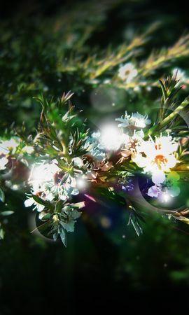 10063 скачать обои Растения, Цветы - заставки и картинки бесплатно