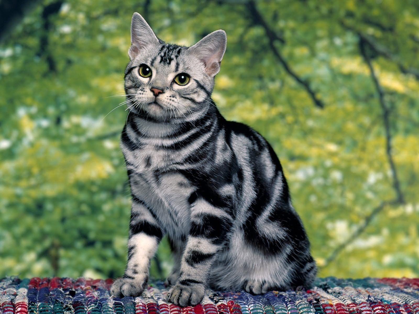 51584 Screensavers and Wallpapers Kitten for phone. Download Animals, Sit, Kitty, Kitten, Striped pictures for free