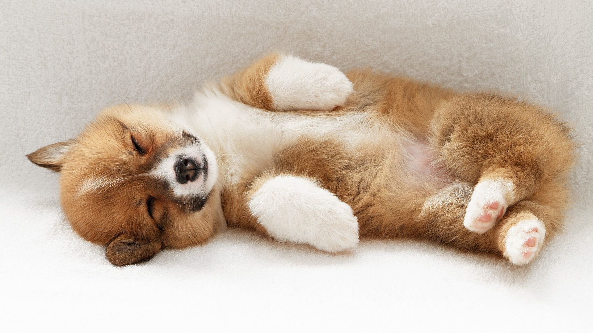 128873 download wallpaper Animals, Dog, Puppy, To Lie Down, Lie, Playful screensavers and pictures for free