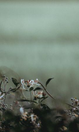 86487 descargar fondo de pantalla Flores, Plantas, Pétalos, Borrosidad, Suave: protectores de pantalla e imágenes gratis