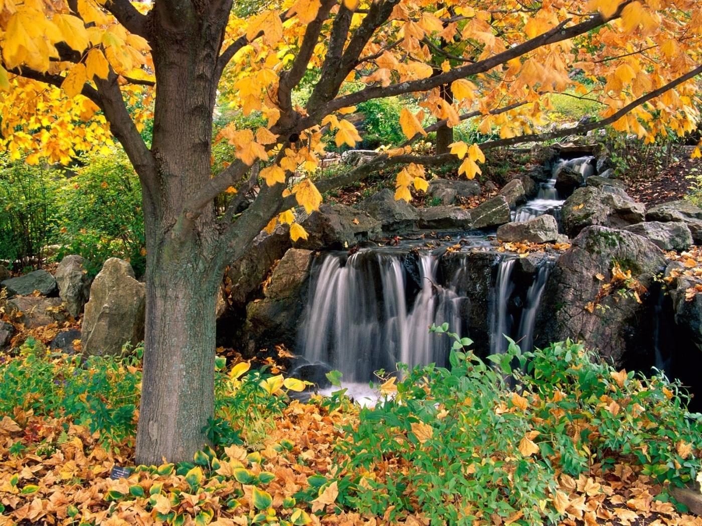 31882 скачать обои Пейзаж, Деревья, Осень, Водопады - заставки и картинки бесплатно