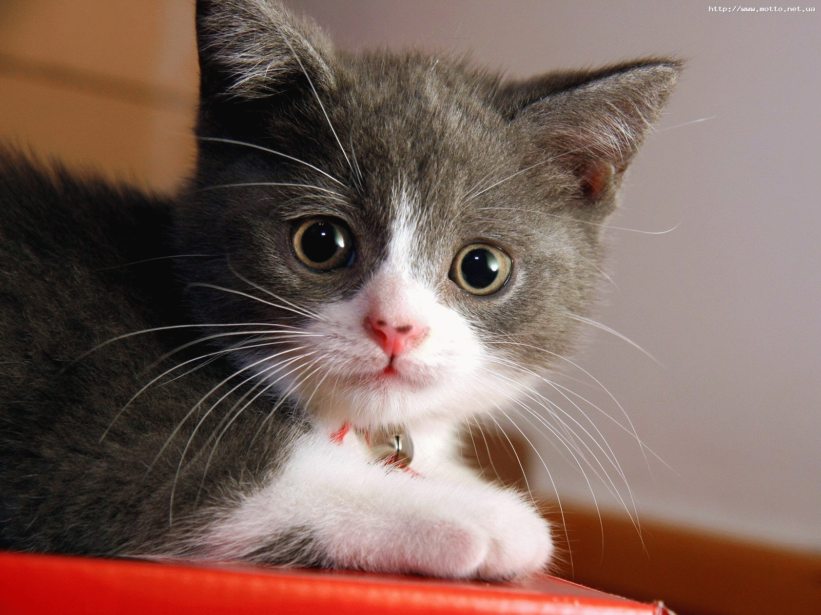 988 Заставки и Обои Кошки (Коты, Котики) на телефон. Скачать Кошки (Коты, Котики), Животные картинки бесплатно