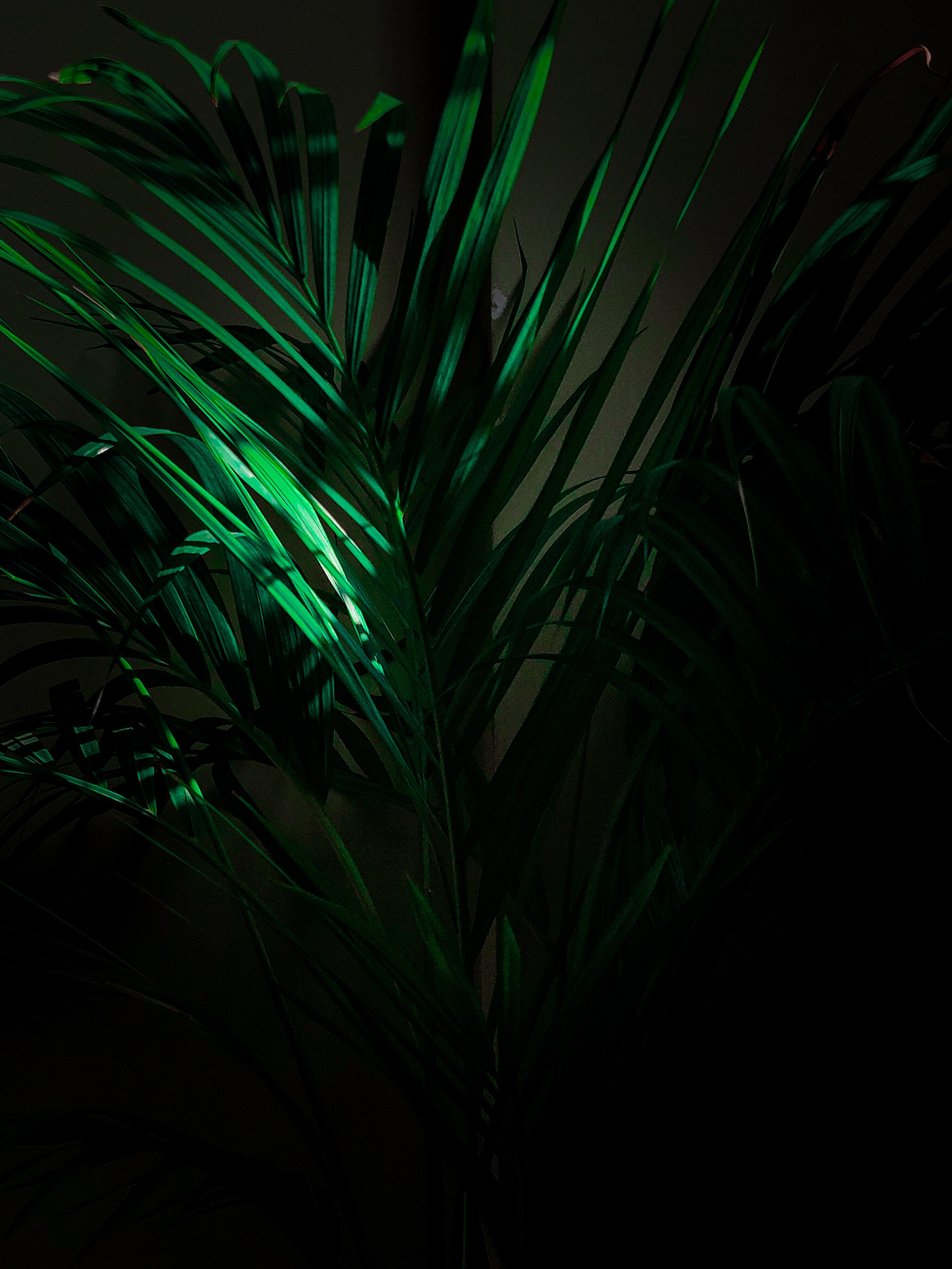 151269 скачать обои Разное, Растение, Листья, Ветки, Тропический - заставки и картинки бесплатно