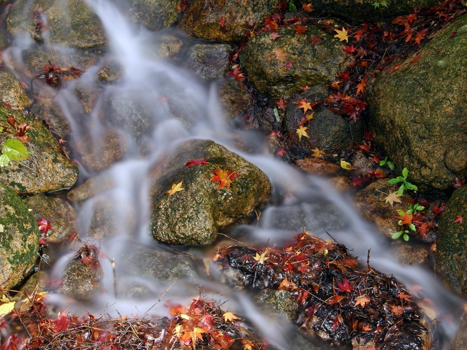 11153 скачать обои Пейзаж, Вода, Река, Камни, Листья - заставки и картинки бесплатно