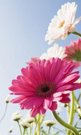 44639 télécharger le fond d'écran Plantes, Fleurs - économiseurs d'écran et images gratuitement