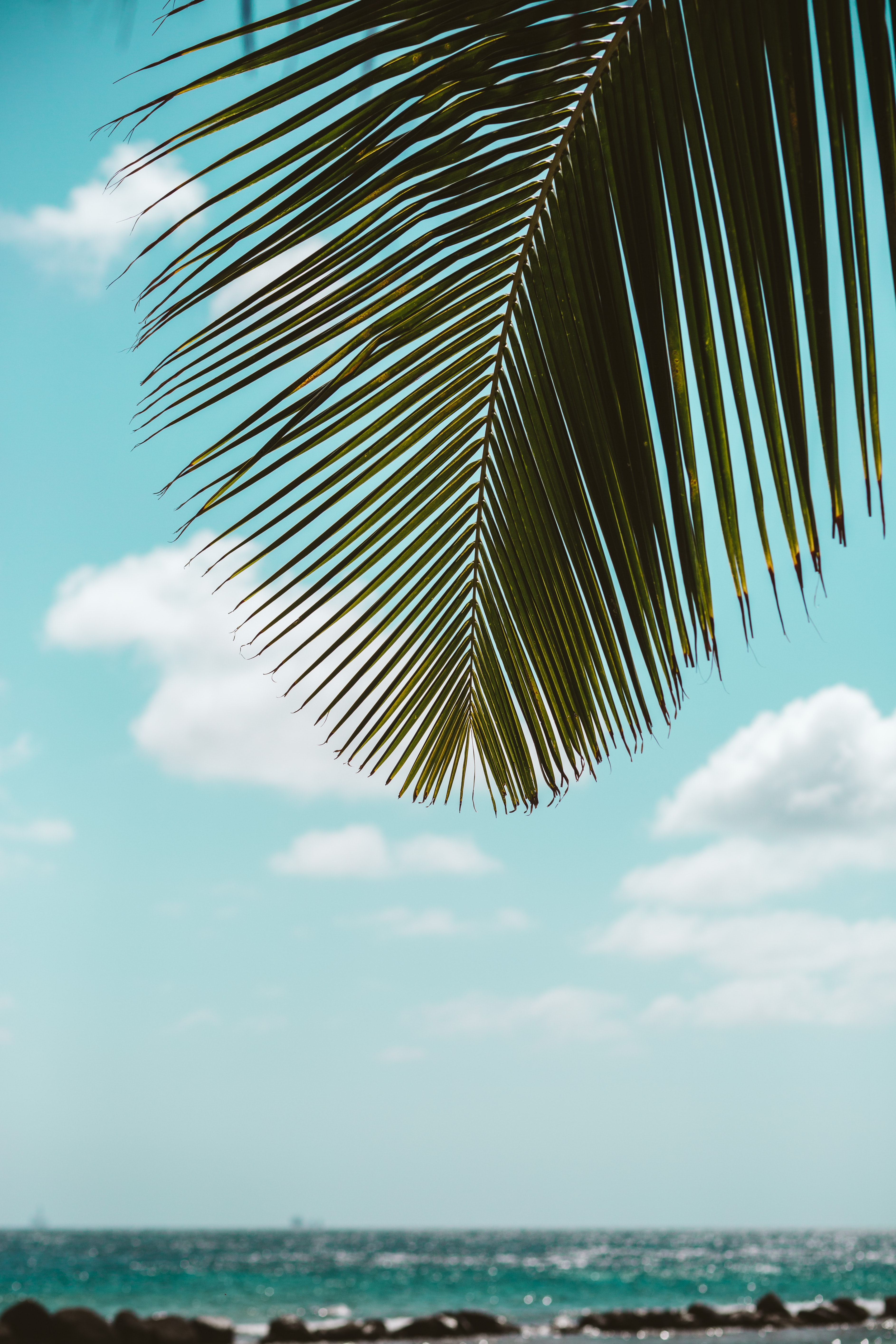 84156 download wallpaper Nature, Palm, Leaves, Sea, Beach, Tropics screensavers and pictures for free