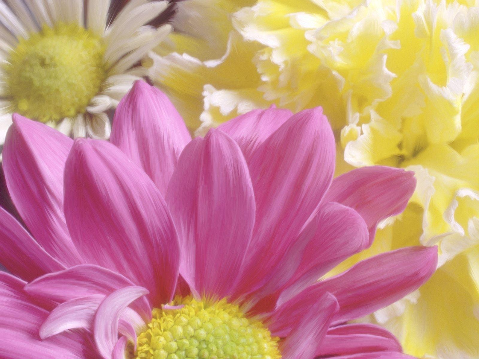8653 скачать обои Растения, Цветы, Хризантемы, Рисунки - заставки и картинки бесплатно