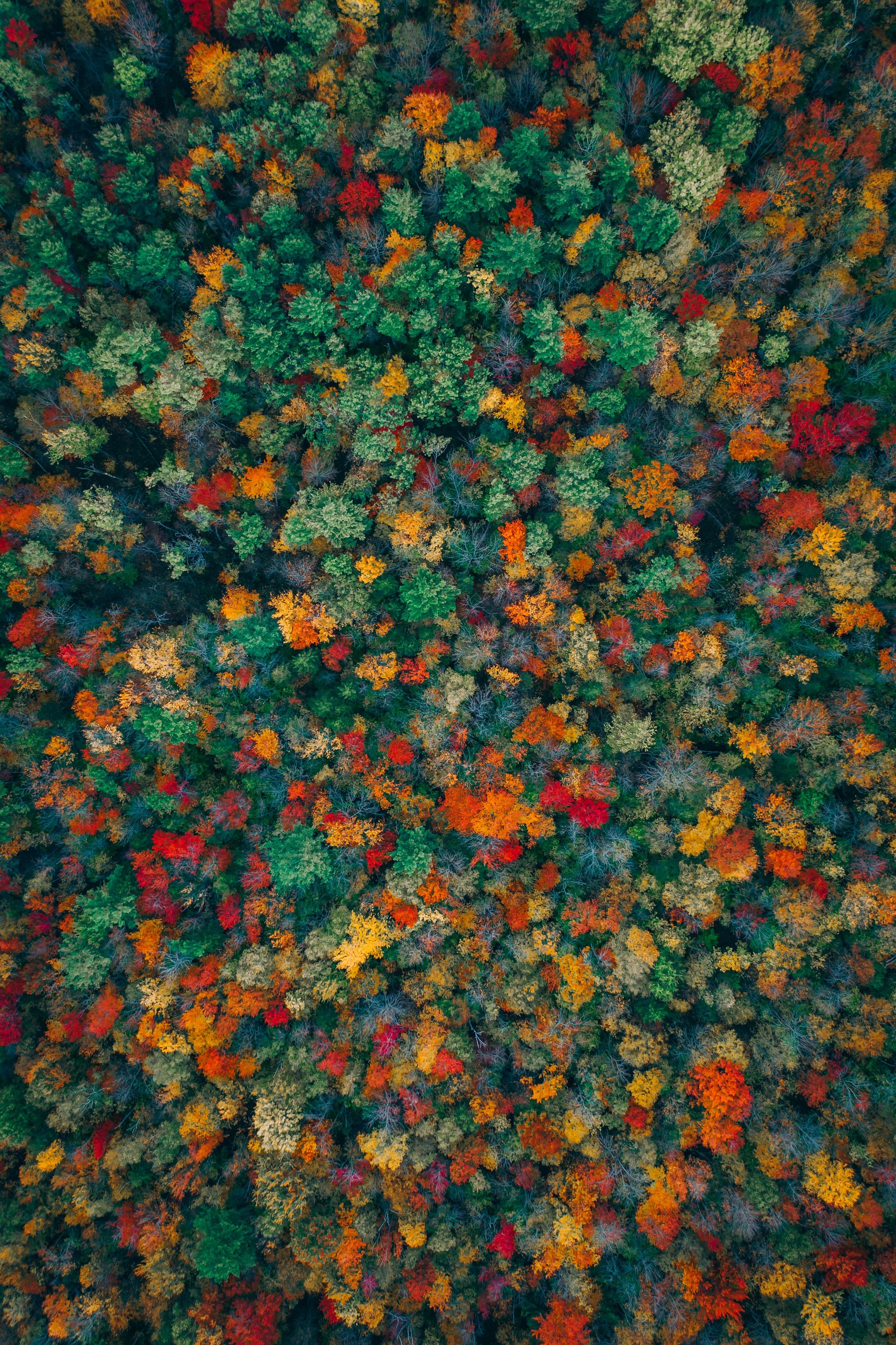 134494 télécharger le fond d'écran Automne, Nature, Arbres, Vue D'en-Haut, Vue D'En Haut, Forêt, Multicolore, Hétéroclite - économiseurs d'écran et images gratuitement