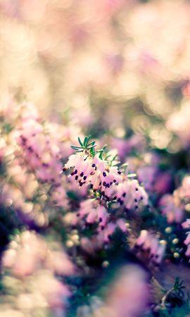 20924 скачать обои Растения, Цветы - заставки и картинки бесплатно