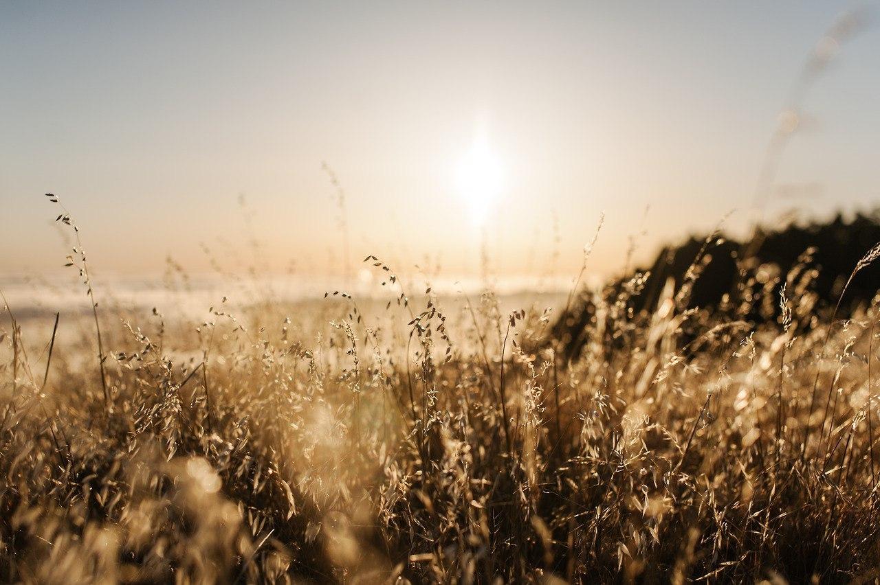 22181 скачать обои Пейзаж, Трава, Солнце - заставки и картинки бесплатно