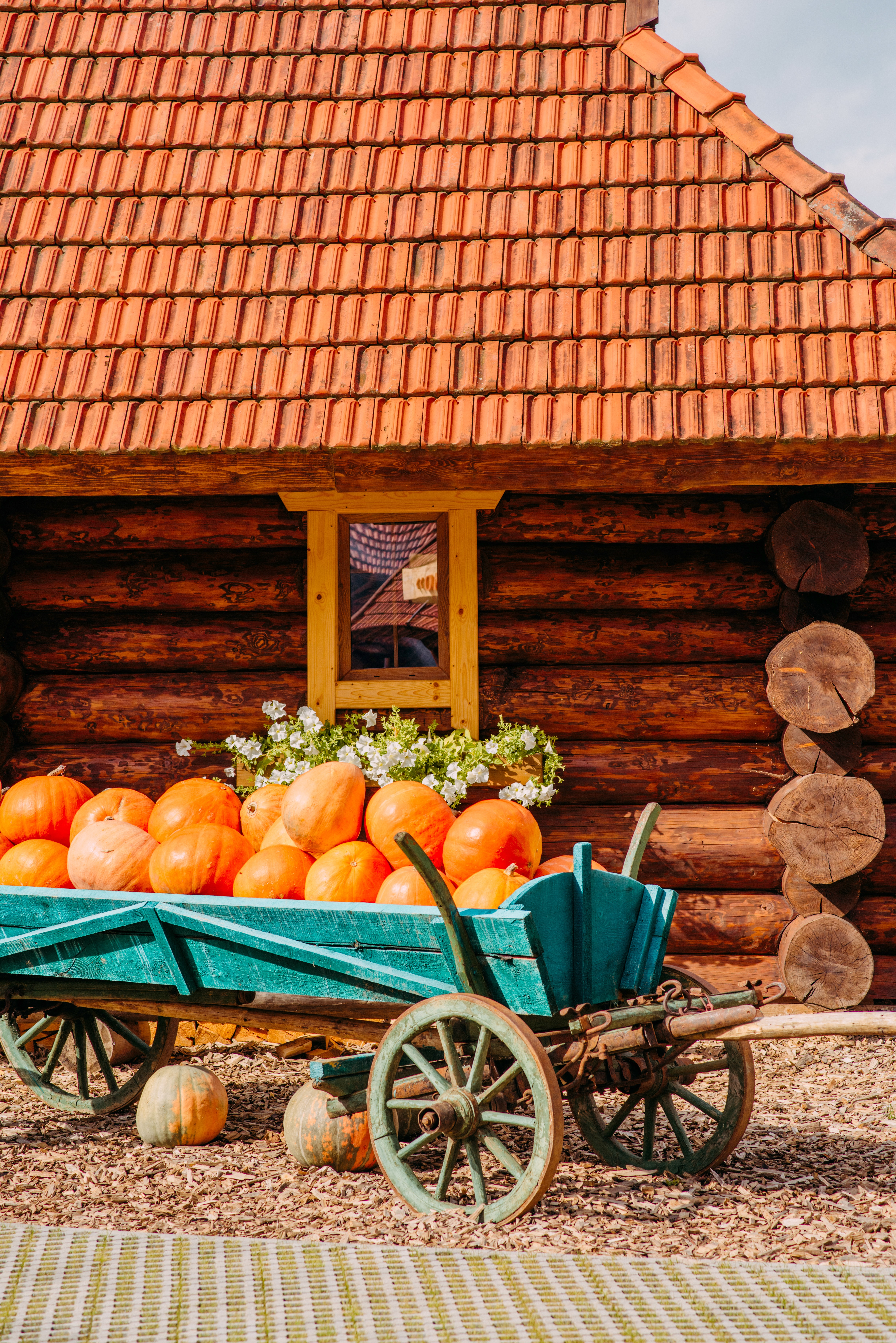 156511 download wallpaper Pumpkin, Miscellanea, Miscellaneous, House, Village, Harvest, Truck, Trolley screensavers and pictures for free