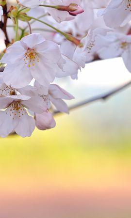 13897 télécharger le fond d'écran Plantes, Fleurs - économiseurs d'écran et images gratuitement