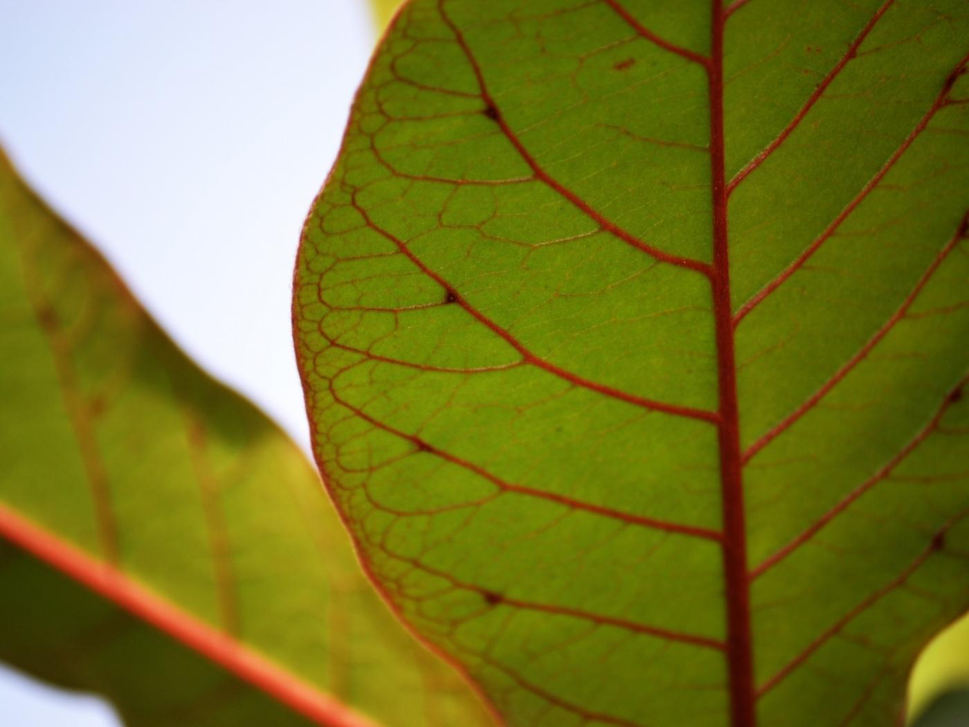 24238 скачать обои Растения, Листья - заставки и картинки бесплатно