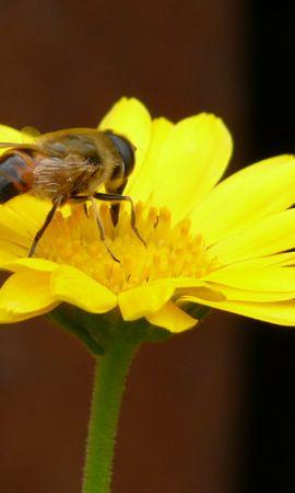 20451 скачать обои Растения, Цветы, Насекомые, Пчелы - заставки и картинки бесплатно