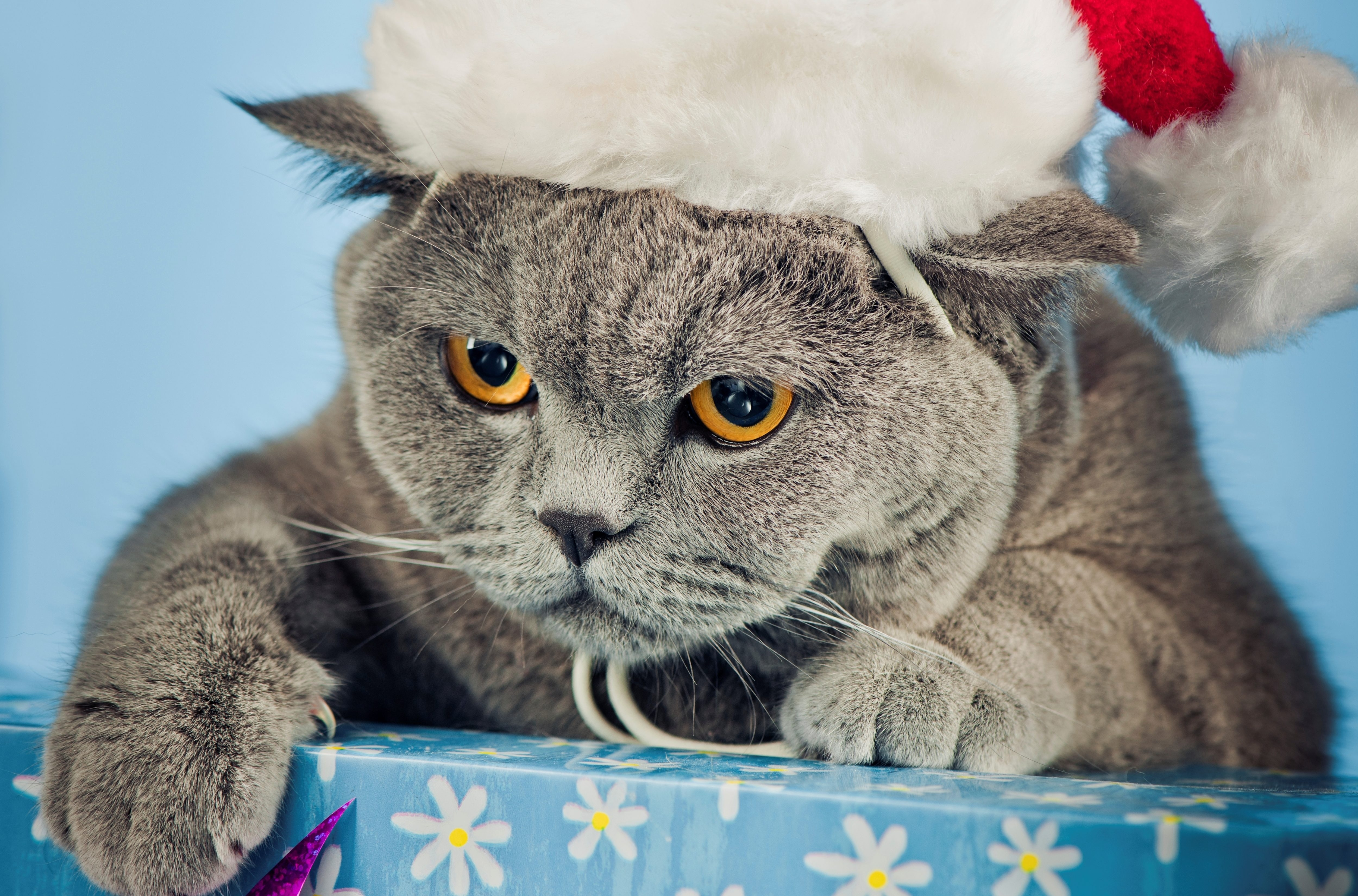 121141 Screensavers and Wallpapers Beautiful for phone. Download Animals, New Year, Cat, Beautiful, Cap pictures for free