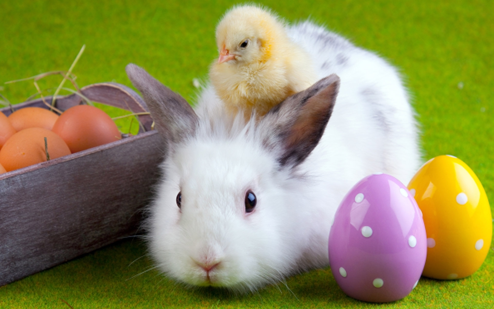 22888 download wallpaper Animals, Birds, Rabbits, Chicks screensavers and pictures for free