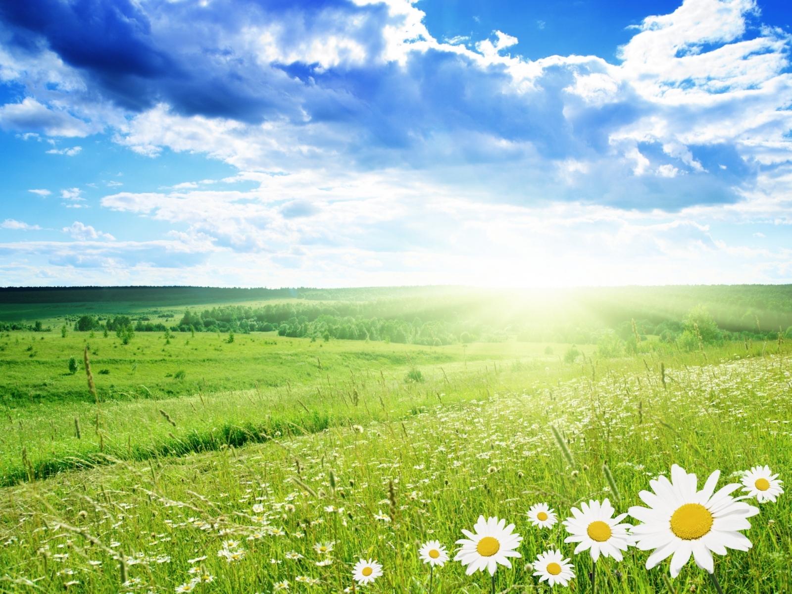 3310 скачать обои Пейзаж, Трава, Небо, Ромашки - заставки и картинки бесплатно
