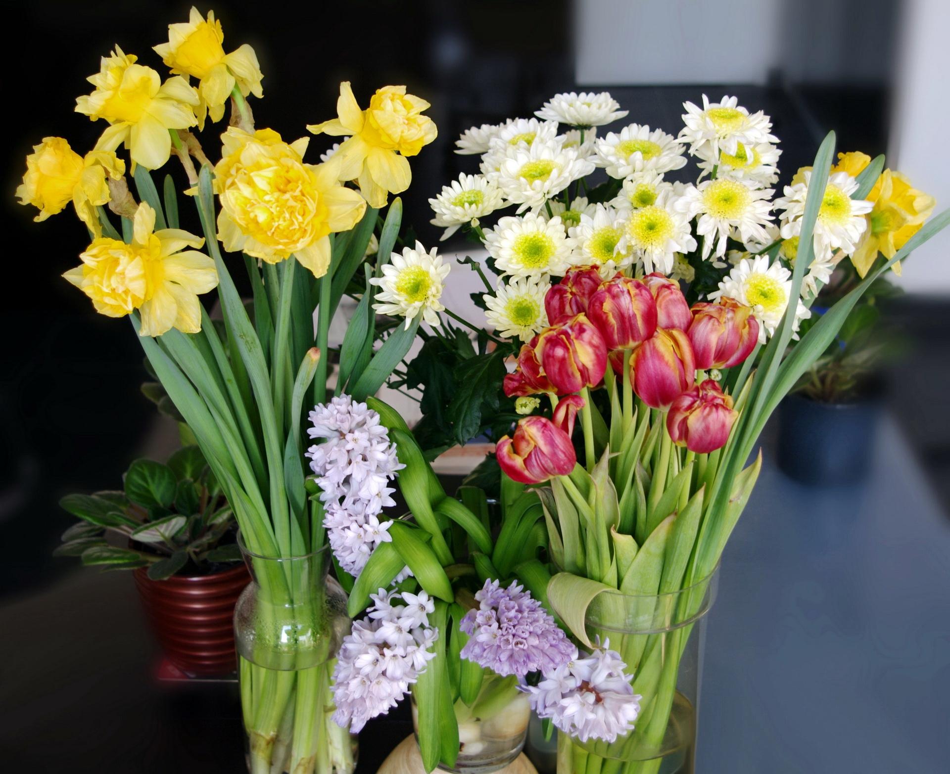 87839 télécharger le fond d'écran Fleurs, Camomille, Vase, Vases, Tulipes, Narcisses, Bouquets - économiseurs d'écran et images gratuitement