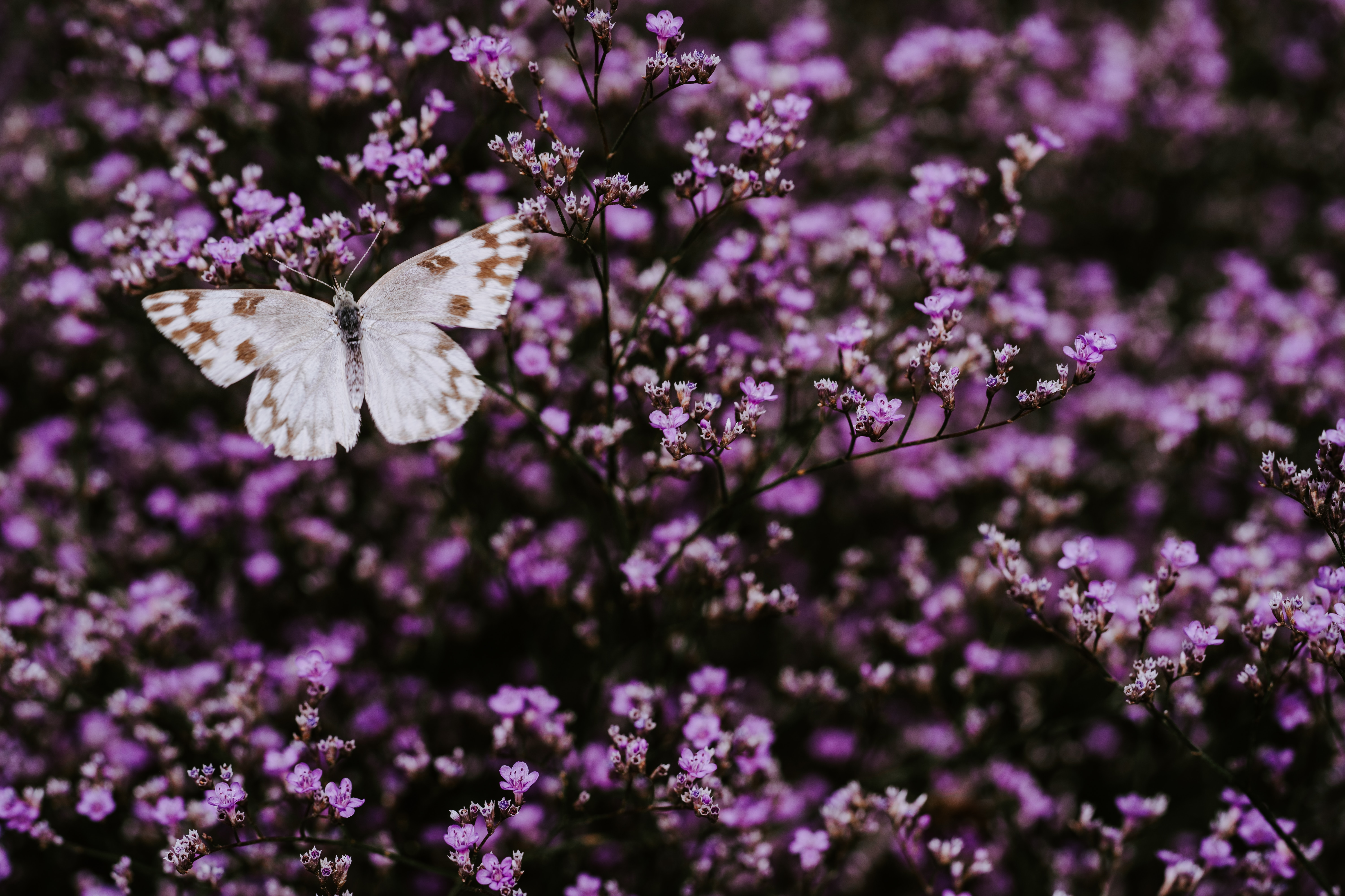 98836 Screensavers and Wallpapers Lilac for phone. Download Flowers, Lilac, Macro, Insect, Butterfly, Wings pictures for free