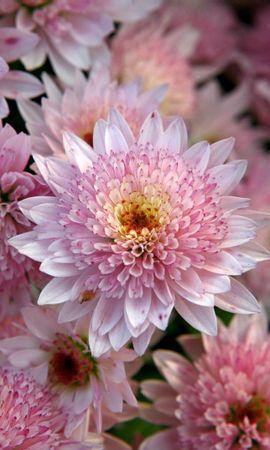 41117 télécharger le fond d'écran Plantes, Fleurs - économiseurs d'écran et images gratuitement
