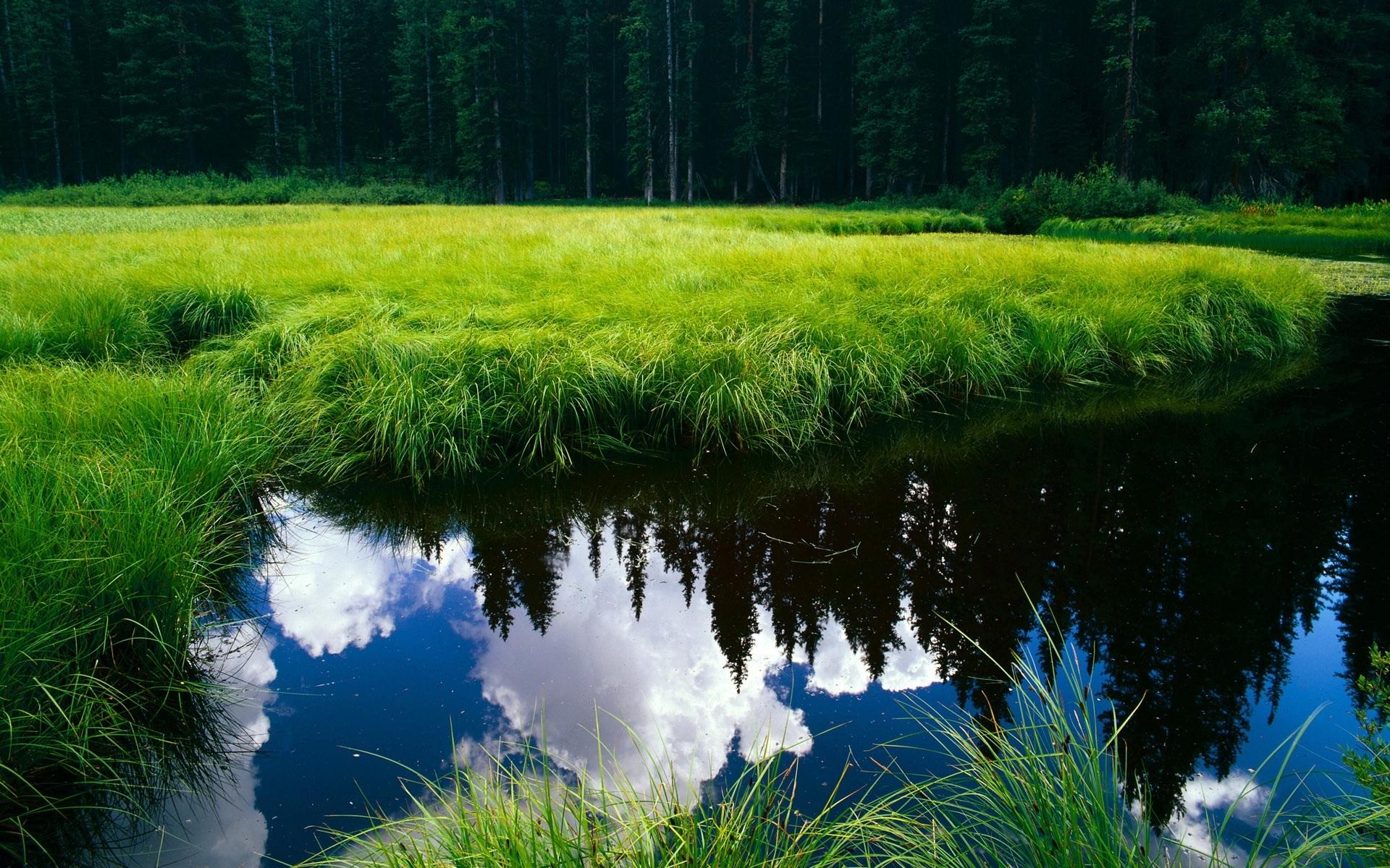 3621 скачать обои Пейзаж, Река, Трава - заставки и картинки бесплатно