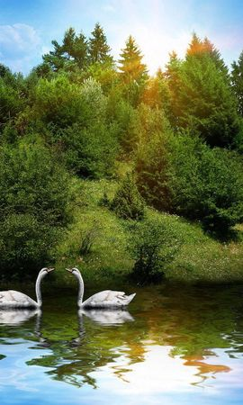 152796 download wallpaper Animals, Swans, Couple, Pair, Rivers, Grass, Trees, Sunlight, Birds screensavers and pictures for free