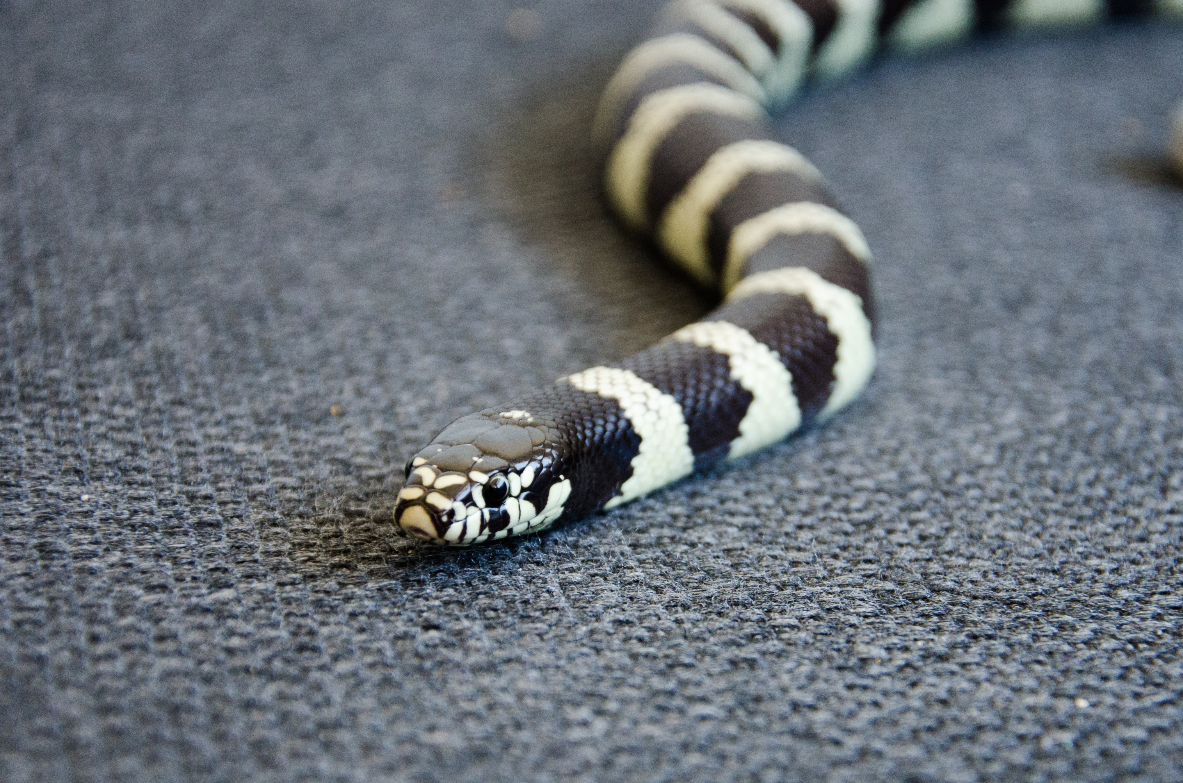 50637 download wallpaper Animals, Snake, Reptile, Head, Color screensavers and pictures for free