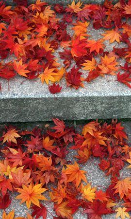 23334 скачать обои Растения, Осень, Листья - заставки и картинки бесплатно