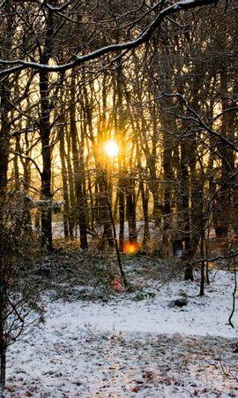 25436 скачать обои Пейзаж, Зима, Деревья, Снег - заставки и картинки бесплатно