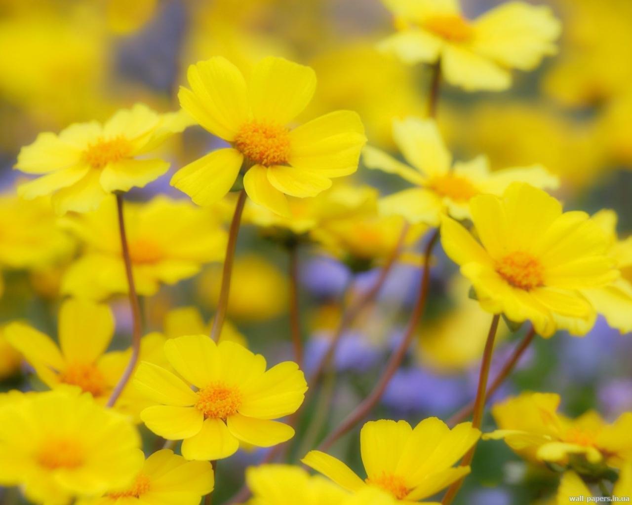 6885 скачать обои Растения, Цветы - заставки и картинки бесплатно