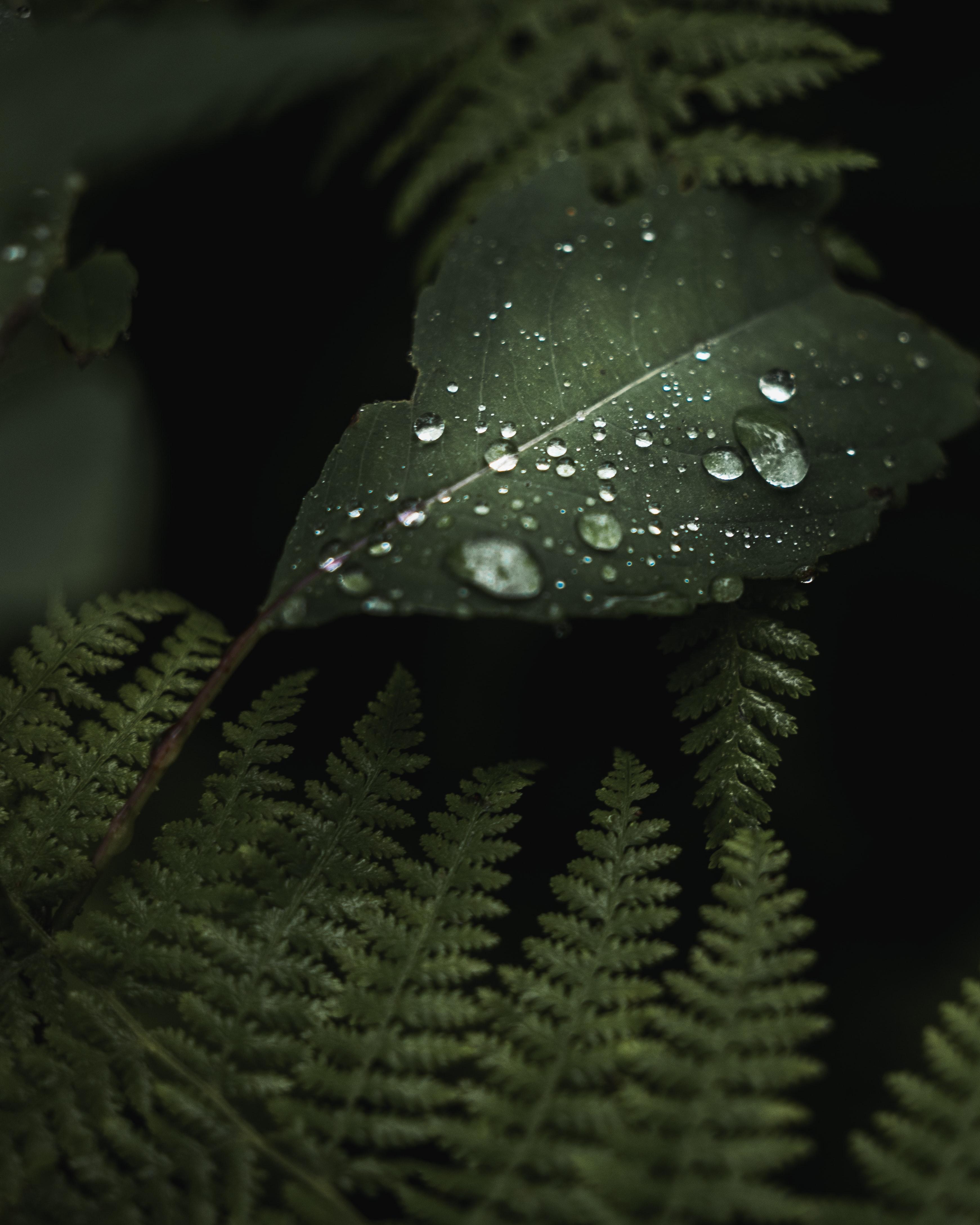 142649 скачать обои Макро, Листья, Капли, Мокрый, Зеленый, Растения - заставки и картинки бесплатно