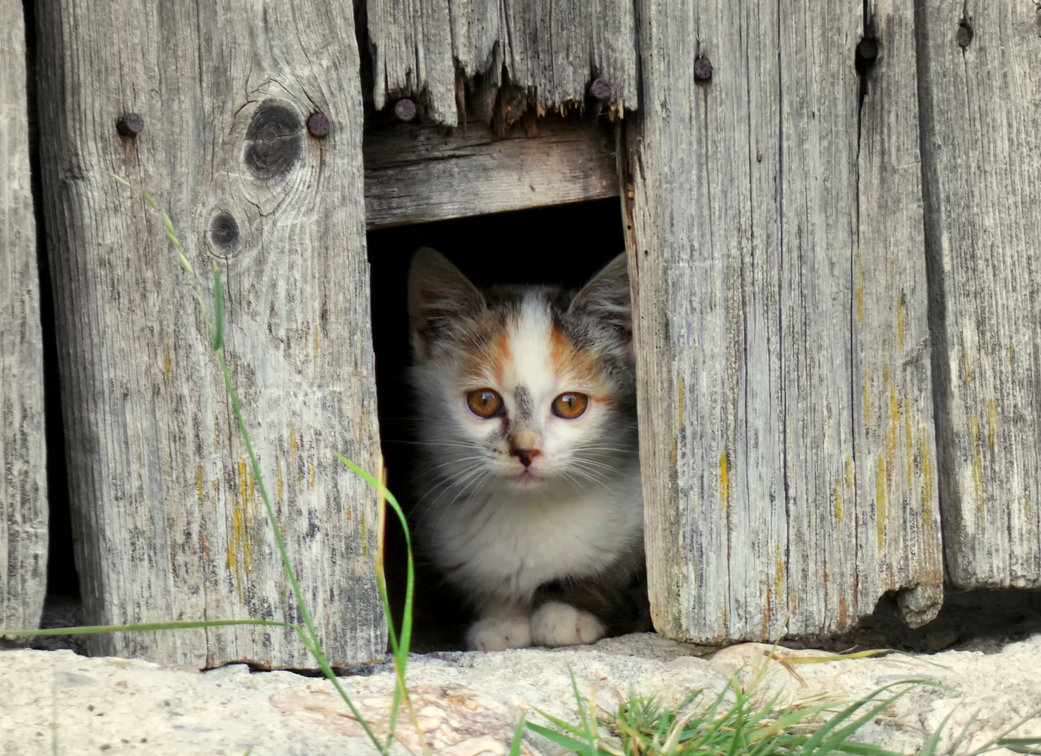 Download mobile wallpaper Animals, Kitty, Kitten, Muzzle, Spotted, Spotty, Fence for free.