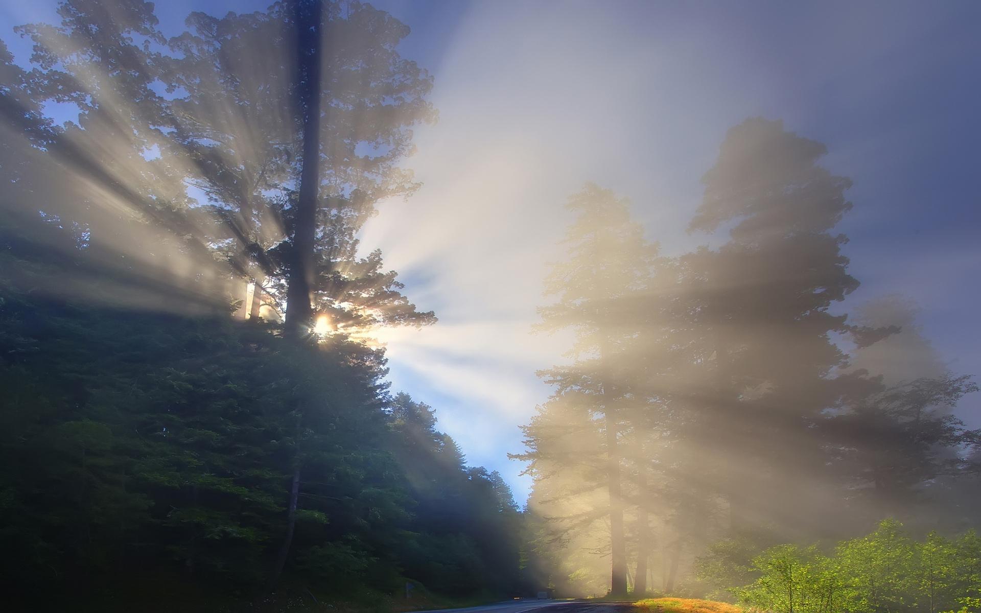 25811 скачать обои Пейзаж, Деревья, Солнце - заставки и картинки бесплатно