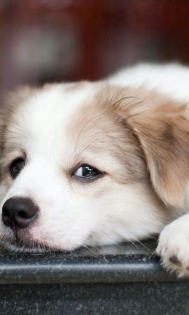 115965 download wallpaper Animals, Puppy, Dog, Muzzle, Sight, Opinion, Sad screensavers and pictures for free