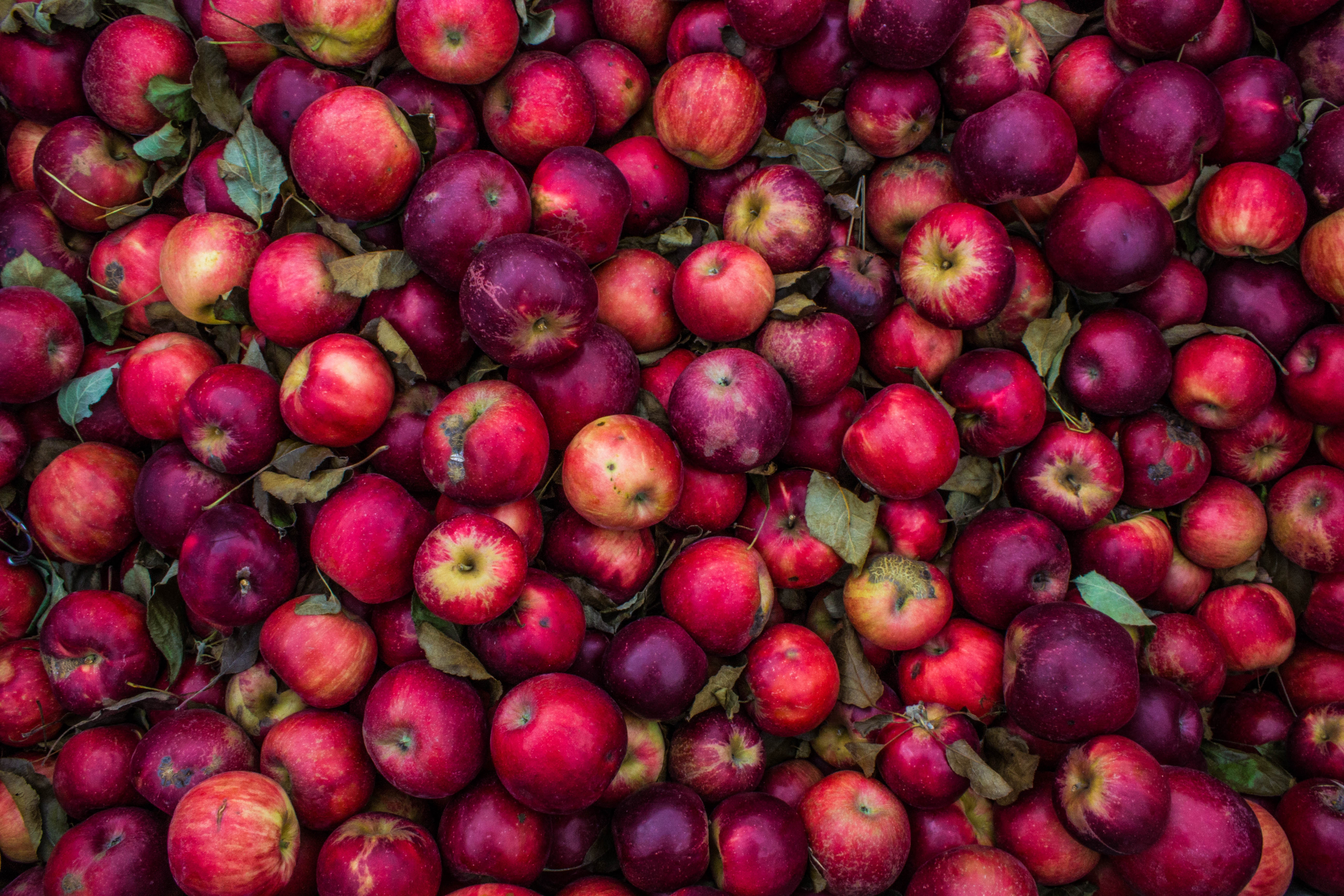 69442 скачать обои Красный, Урожай, Еда, Яблоки, Розовый, Спелый - заставки и картинки бесплатно