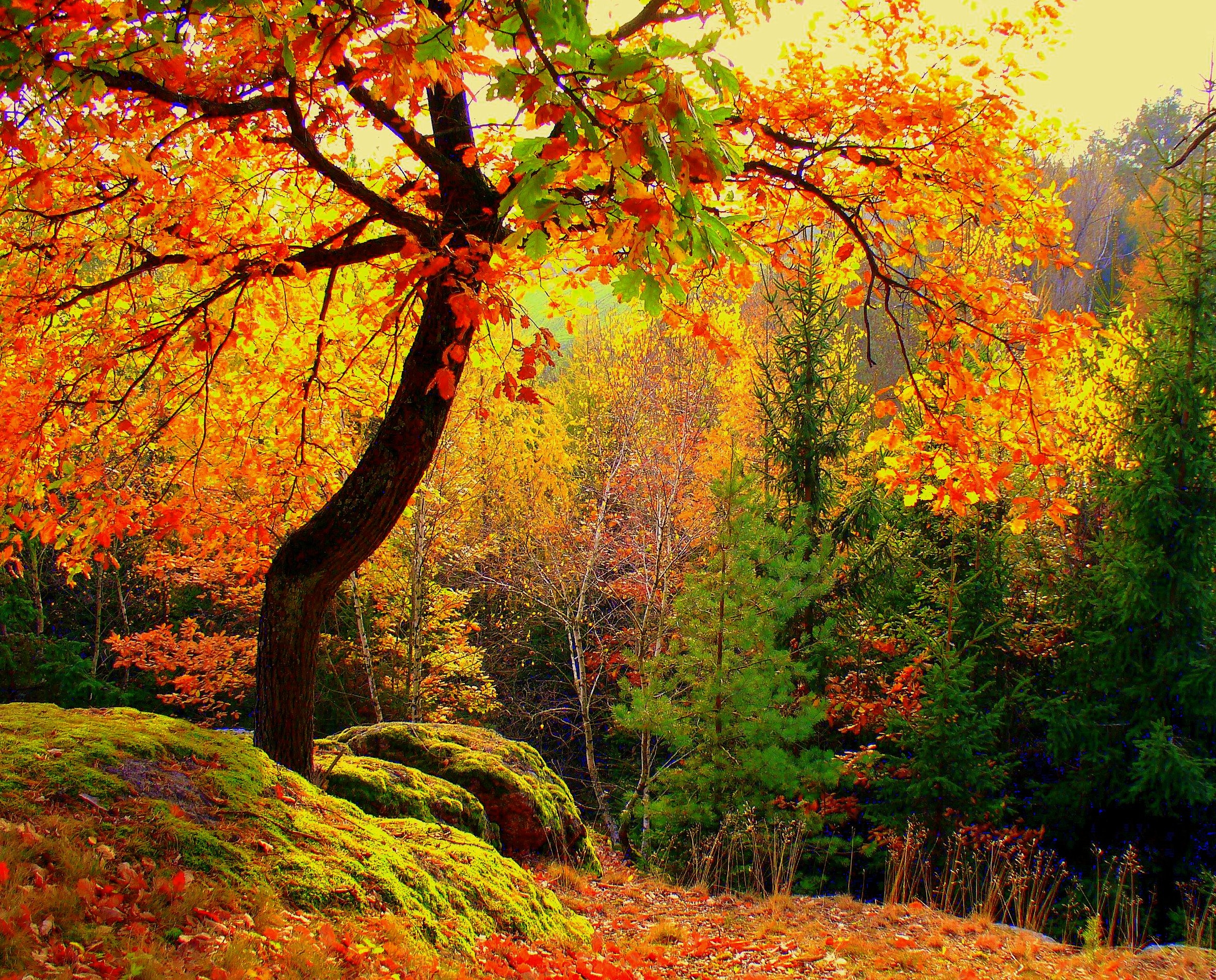 151405 télécharger le fond d'écran Paysage, Nature, Arbres, Automne, Forêt - économiseurs d'écran et images gratuitement