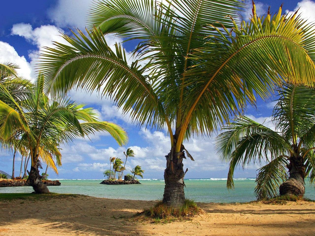 45682壁紙のダウンロード風景, 自然, 海, ビーチ, パームス-スクリーンセーバーと写真を無料で