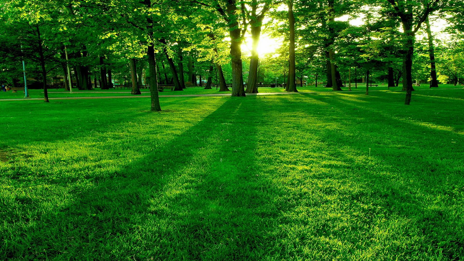 24900 скачать обои Пейзаж, Деревья, Трава, Солнце - заставки и картинки бесплатно