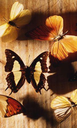 35889 Salvapantallas y fondos de pantalla Insectos en tu teléfono. Descarga imágenes de Mariposas, Insectos gratis