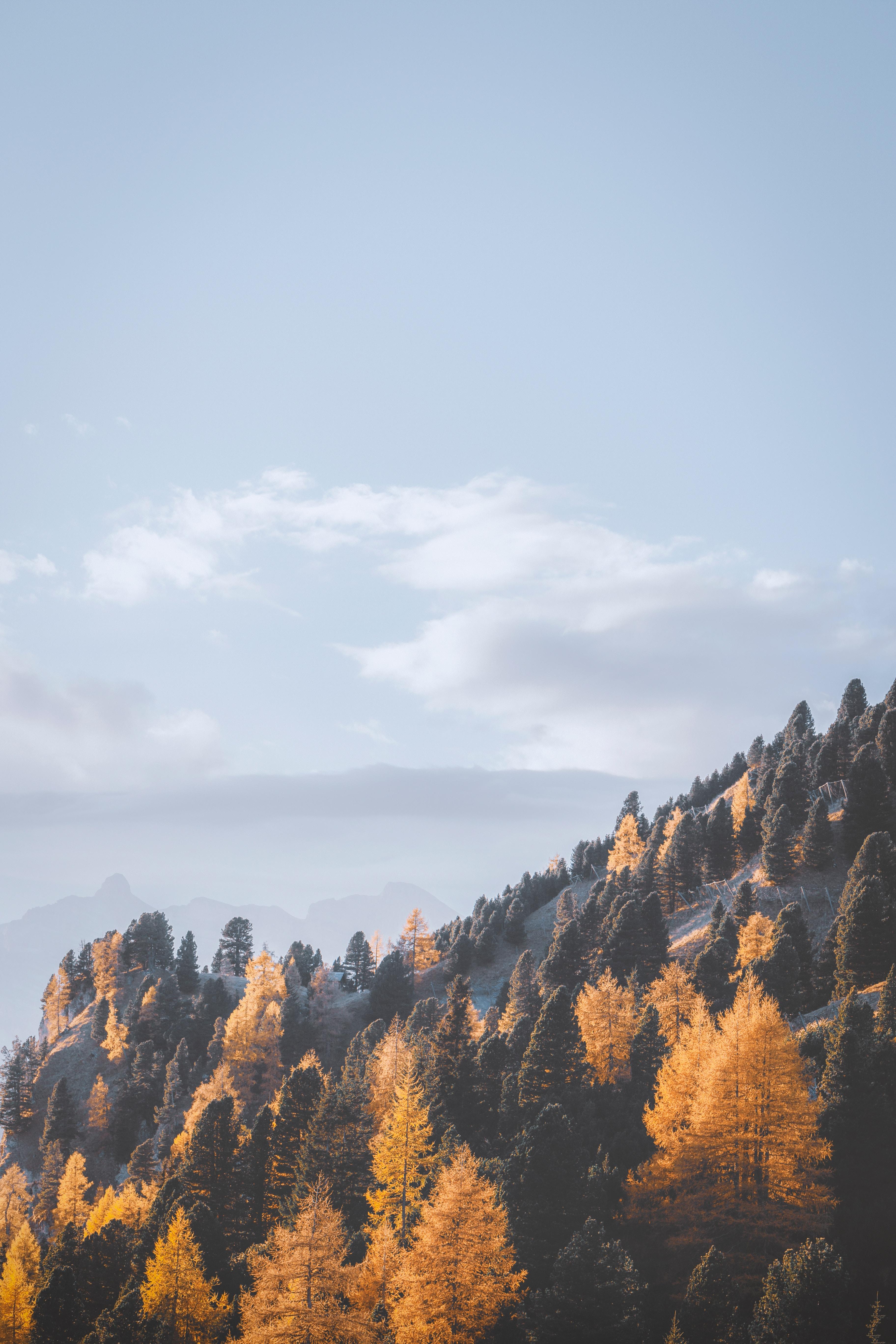 142806 Salvapantallas y fondos de pantalla Paisaje en tu teléfono. Descarga imágenes de Naturaleza, Árboles, Niebla, Pendiente, Cuesta, Montañas, Paisaje gratis