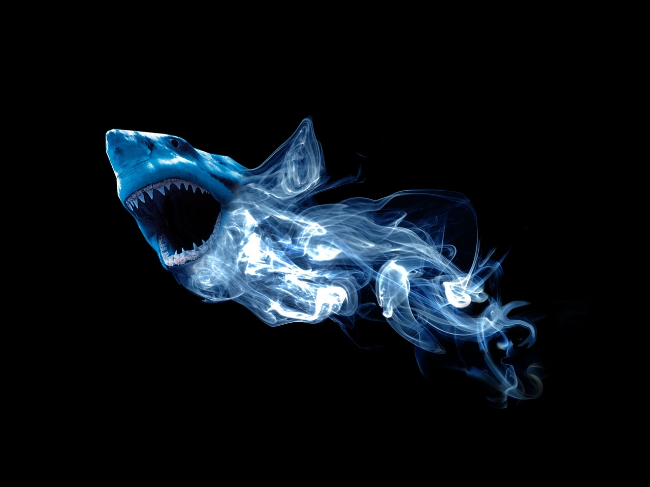 25490 download wallpaper Animals, Background, Sharks screensavers and pictures for free