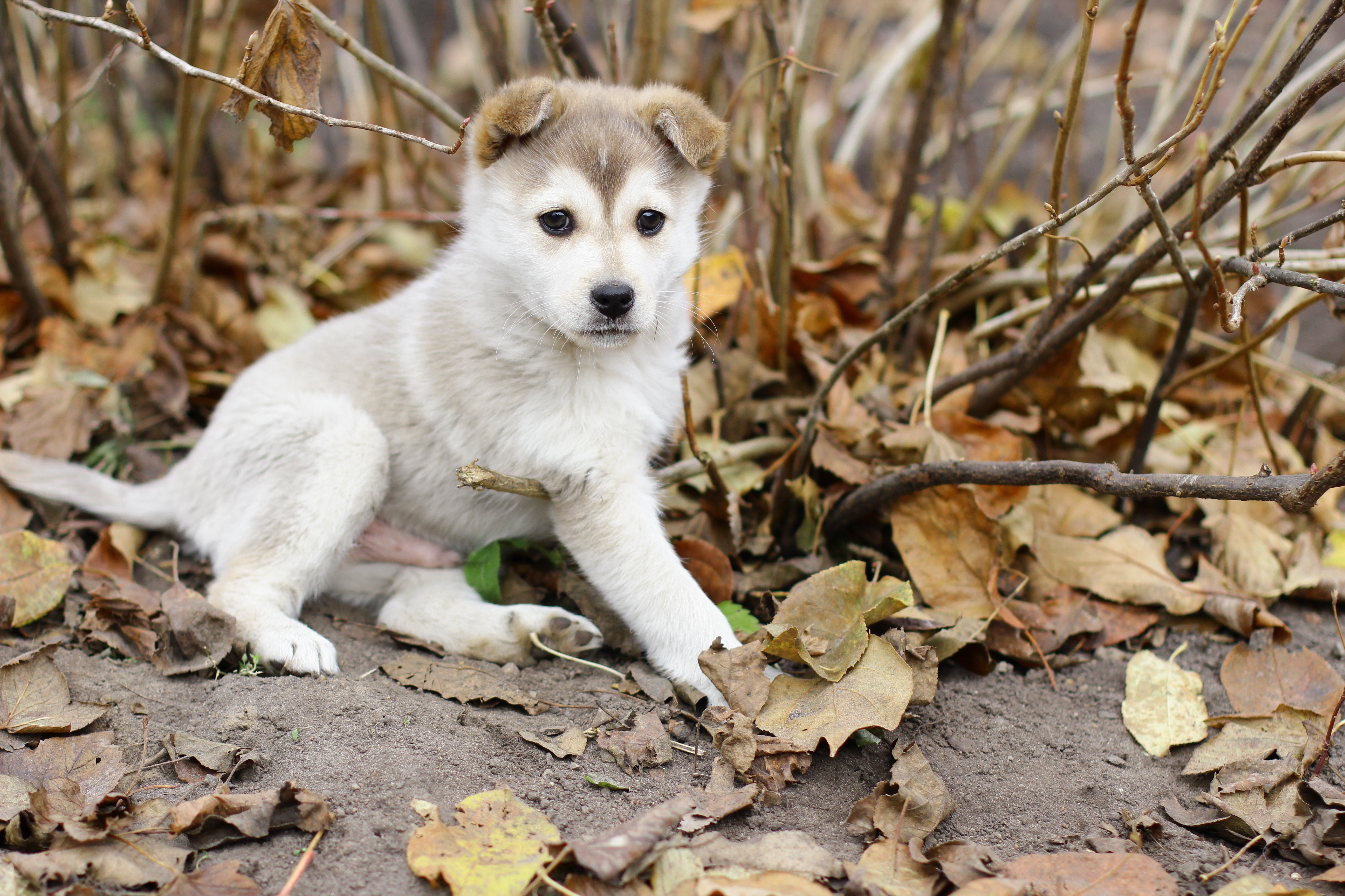 146116 download wallpaper Animals, Puppy, Foliage, Autumn, Playful screensavers and pictures for free