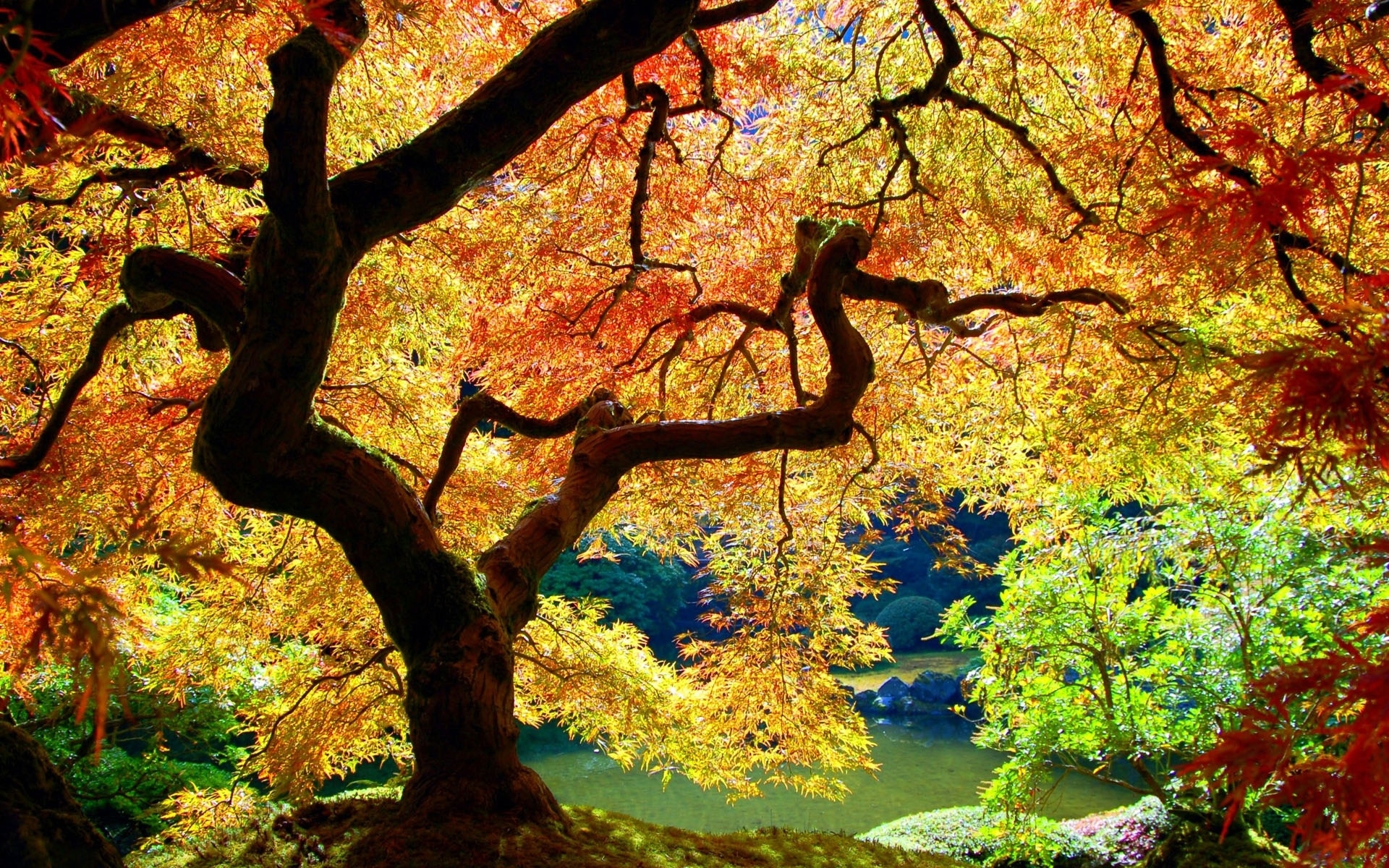 3227 download wallpaper Plants, Landscape, Trees, Autumn screensavers and pictures for free