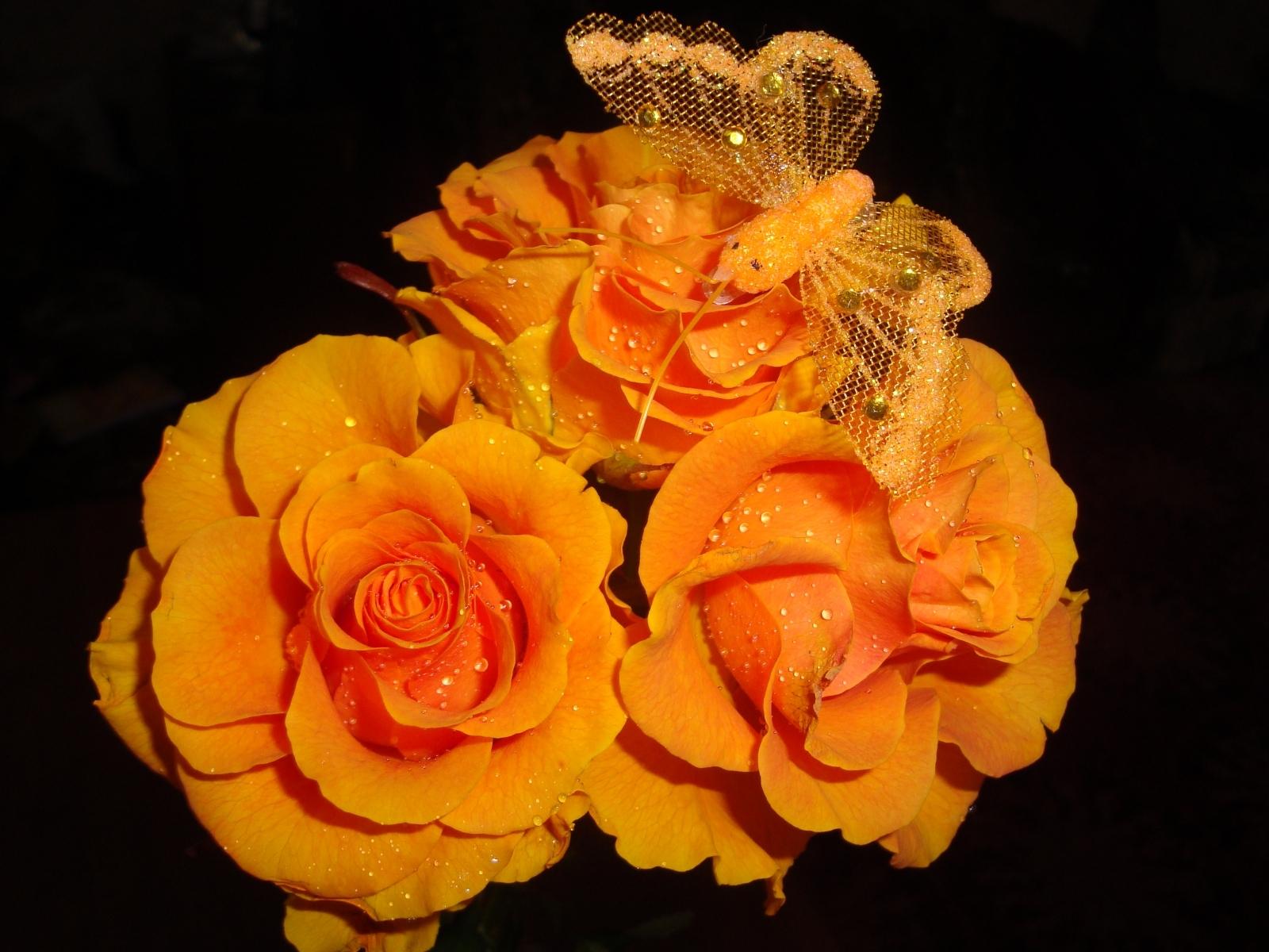 7407 скачать обои Растения, Цветы, Розы - заставки и картинки бесплатно