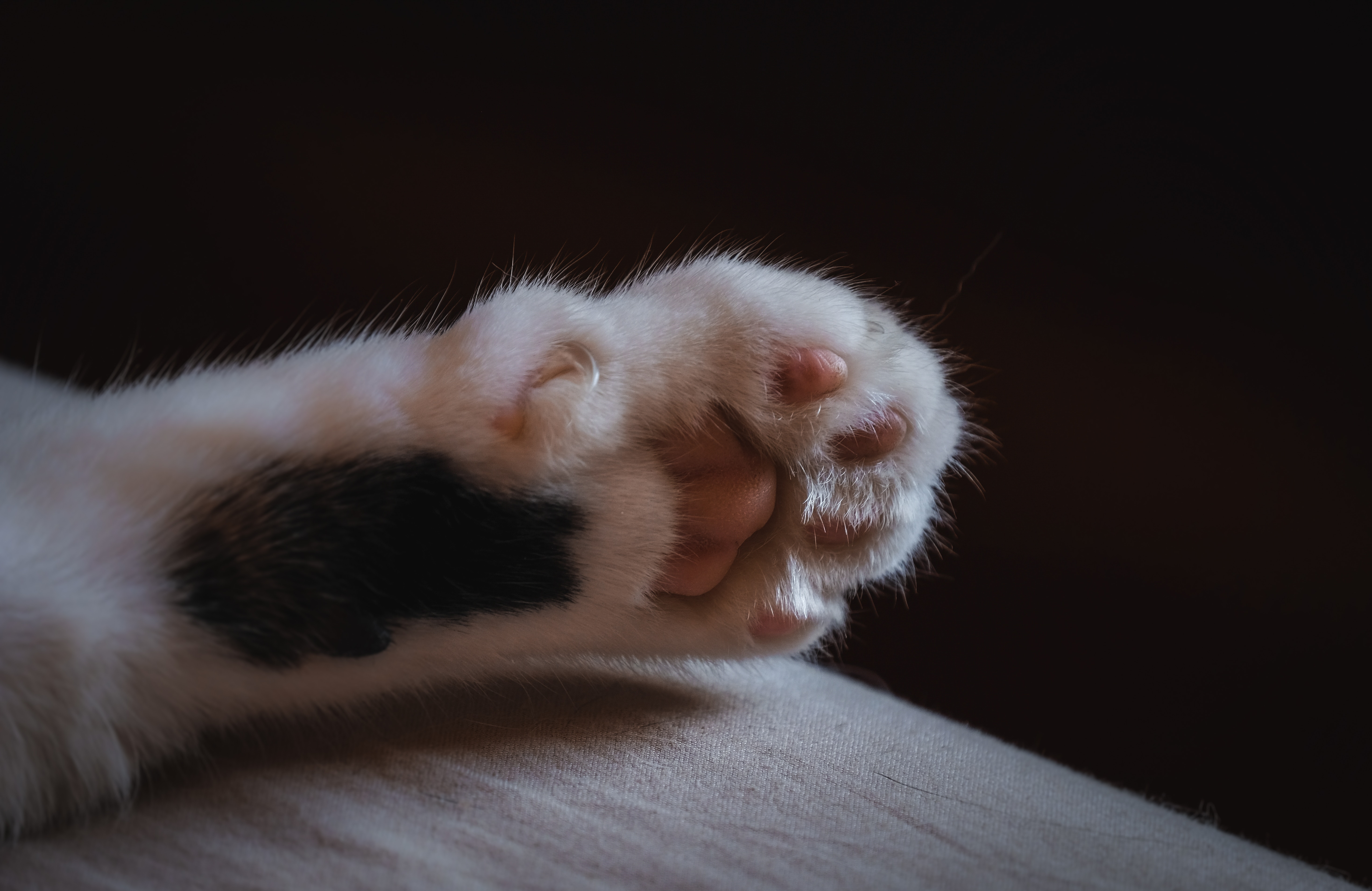 61172 Screensavers and Wallpapers Wool for phone. Download Animals, Cat, Wool, Claws, Paw pictures for free